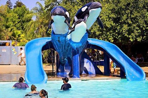 orcas-sm